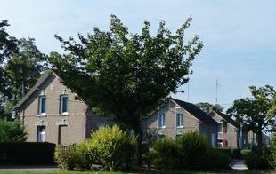 Cité des acacias - Condé-sur-l'Escaut