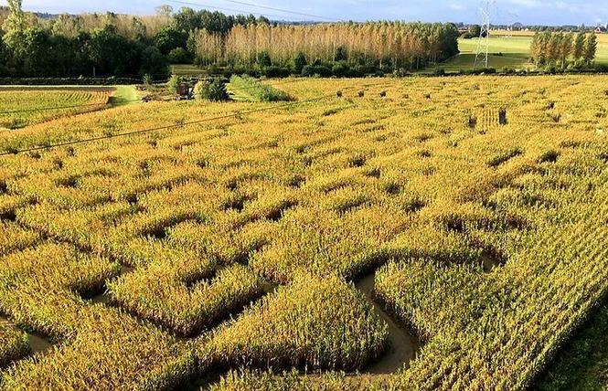 Labyrinthe Végétal Beauregard 3 - Aubry-du-Hainaut